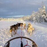 Laponsko
